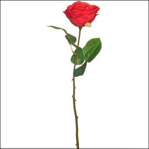 Fresh Line Rosebud Red 43cm