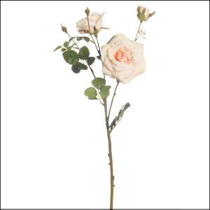 Garden Rose x3 60cm Peach