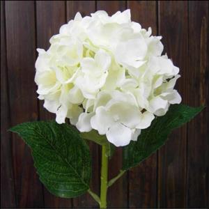 White Hydrangea Single Stem Bunch