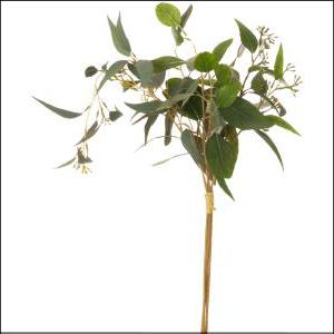 Eucalyptus Bouquet X4 50cm