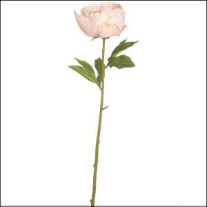 Single Peony Pink