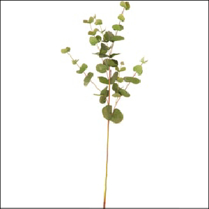 Eucalyptus Spray 90cm