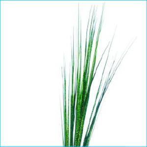 Spray Green Grass